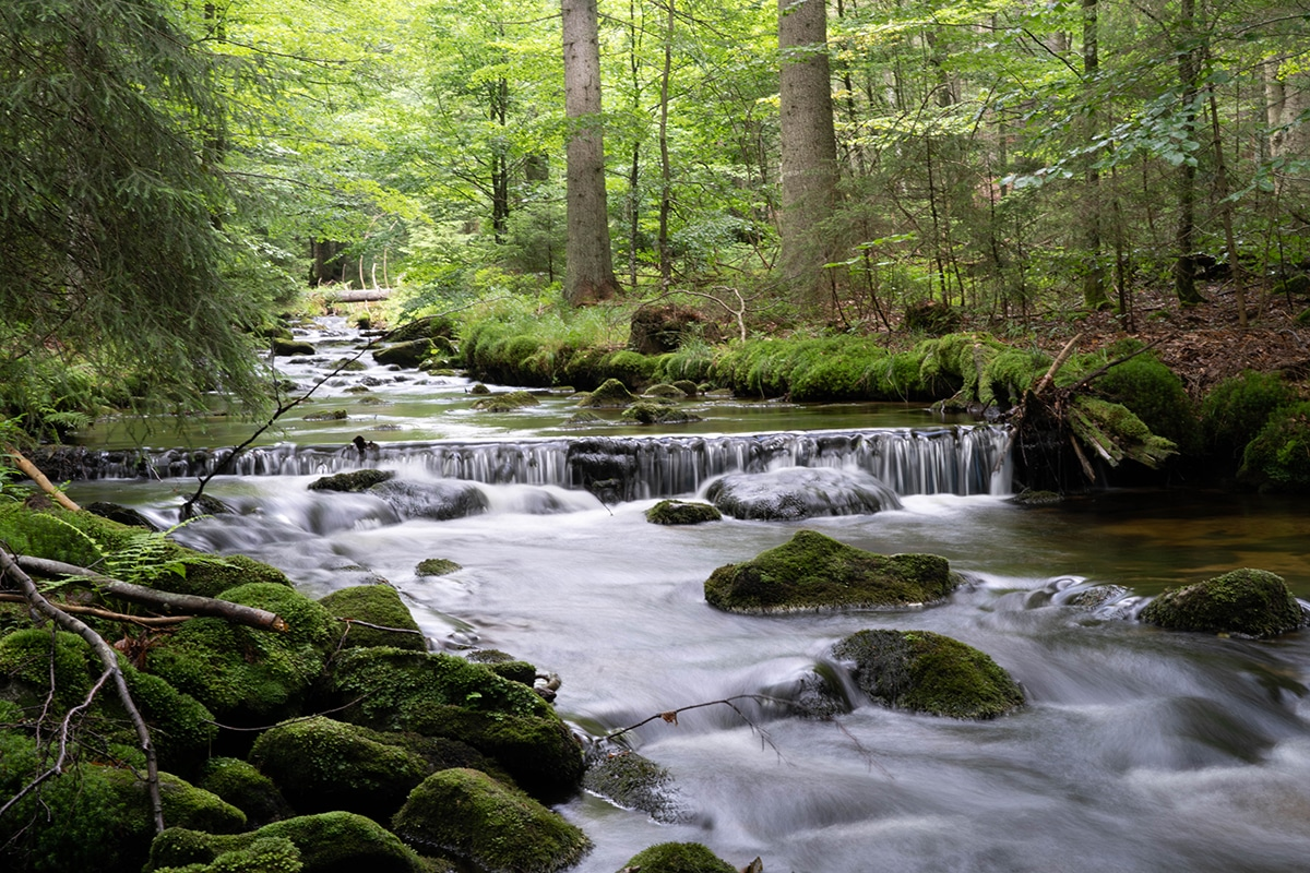 nationalpark-sagwasserklause-bach-felsen-baueme