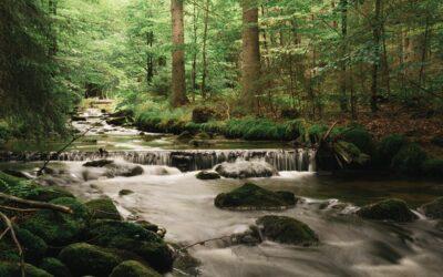 Wanderung Sagwasserklause / Nationalpark Bayerischer Wald