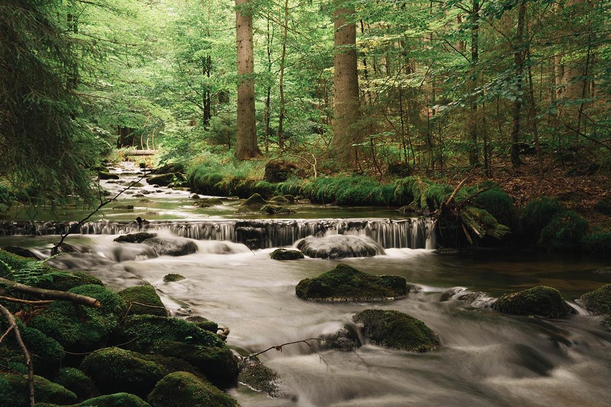 nationalpark-sagwasserklause-bach-felsen-wald