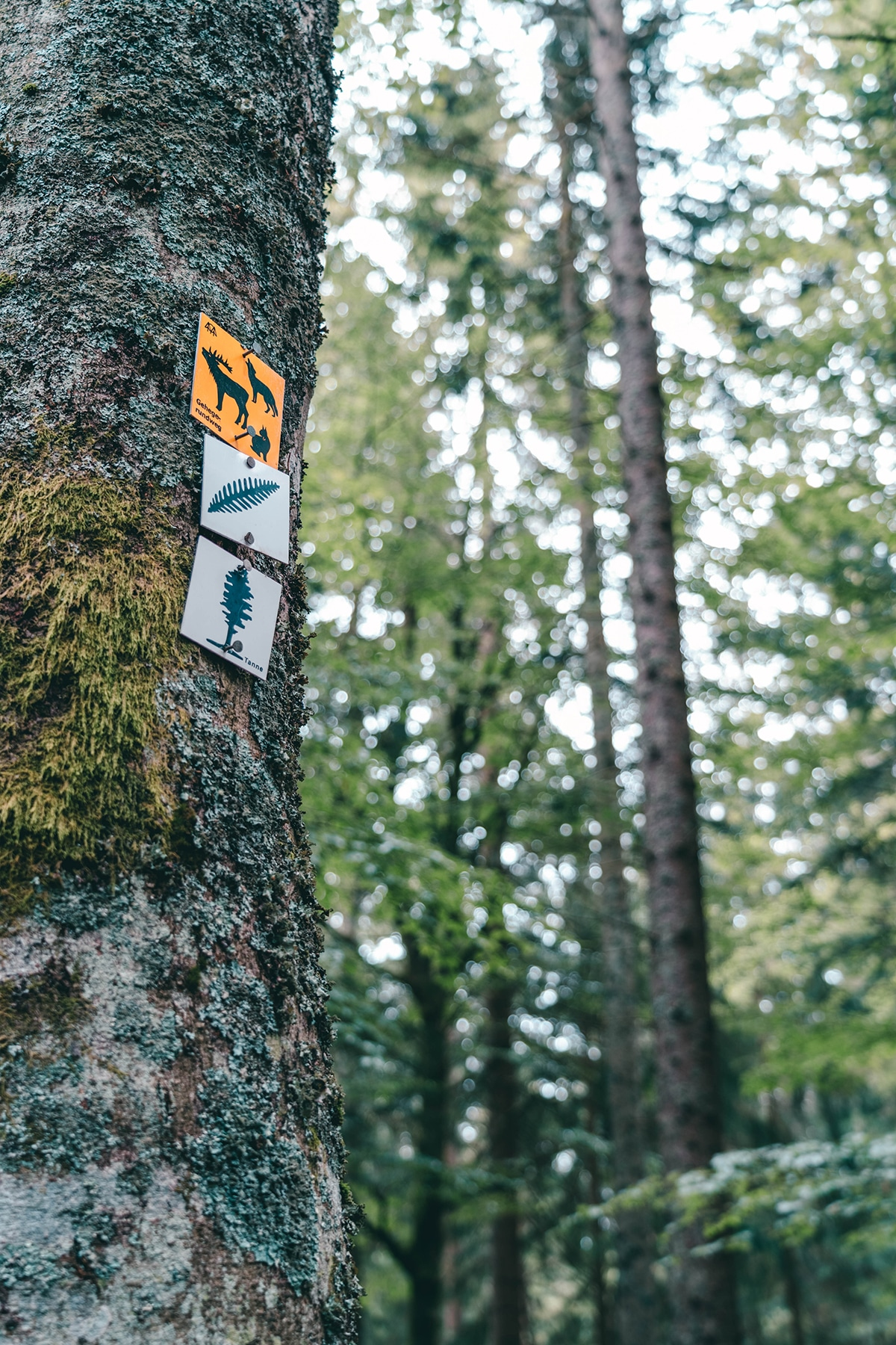 nationalpark-sagwasserklause-baum-markierung