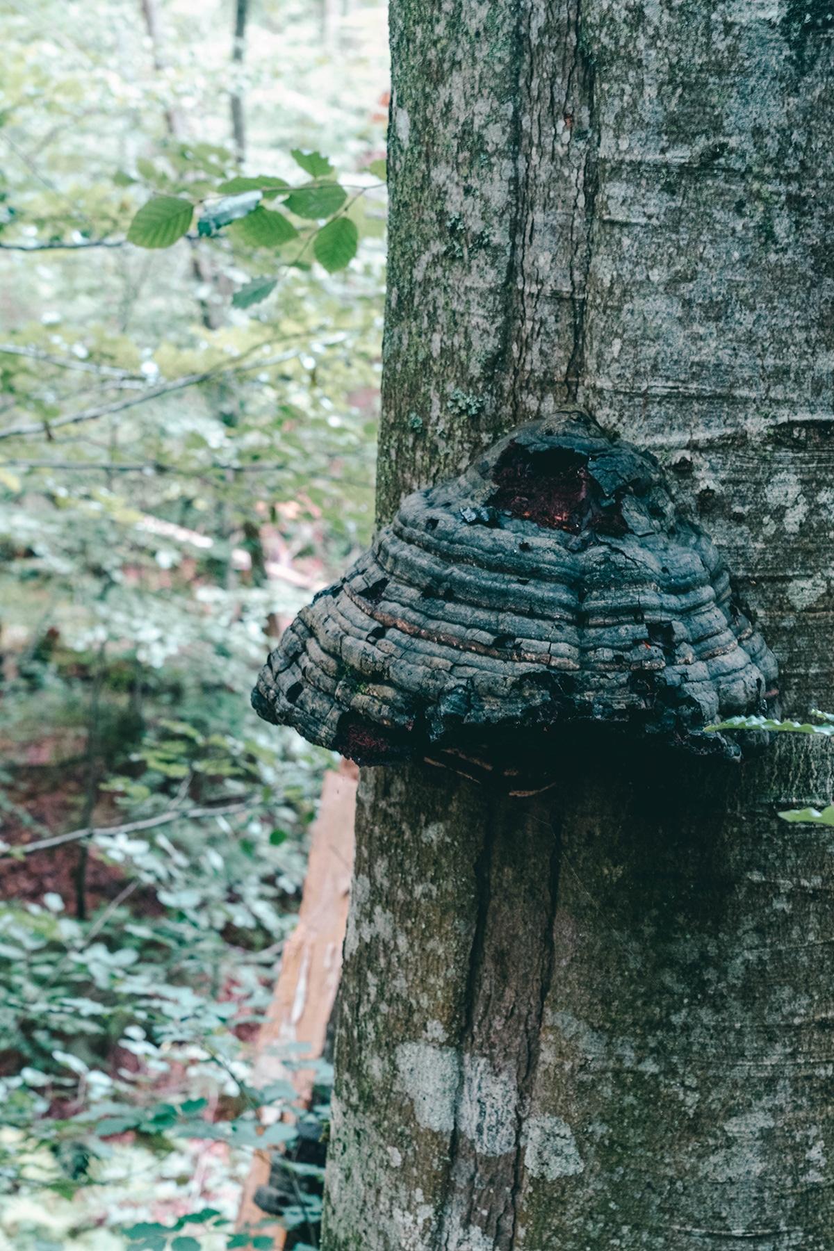 nationalpark-sagwasserklause-bienen-nest