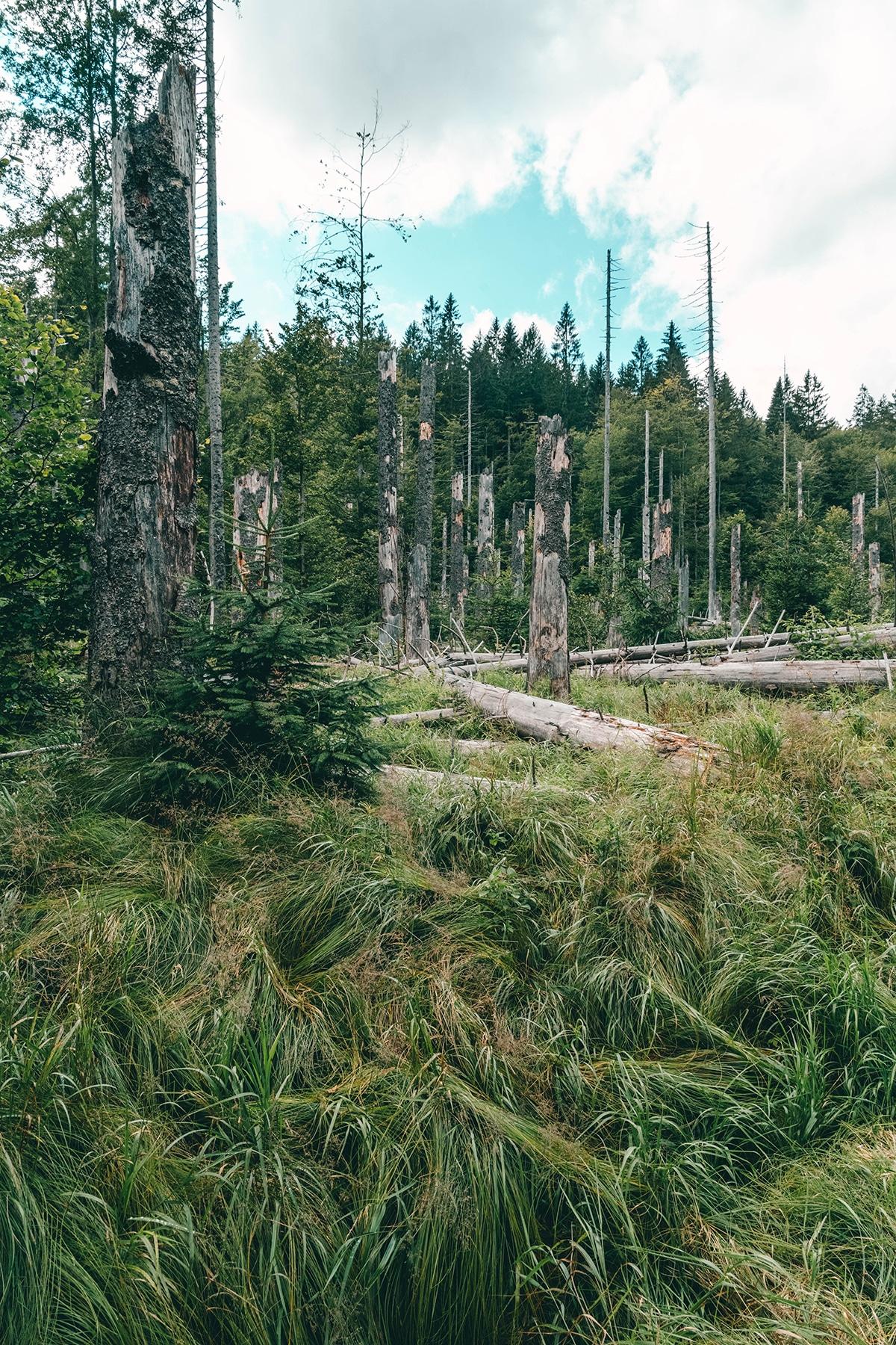 nationalpark-sagwasserklause-totoholz