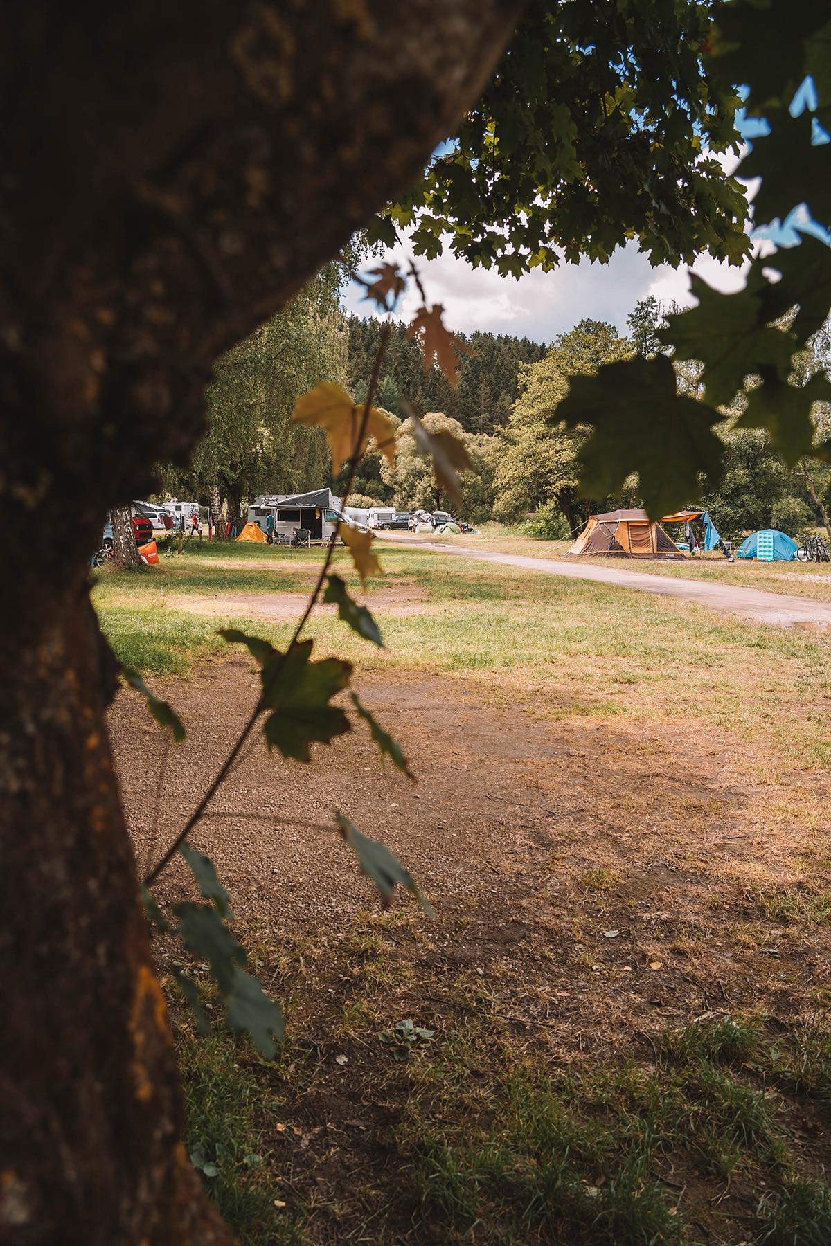 schnitzmuehle-camping-platz-baum