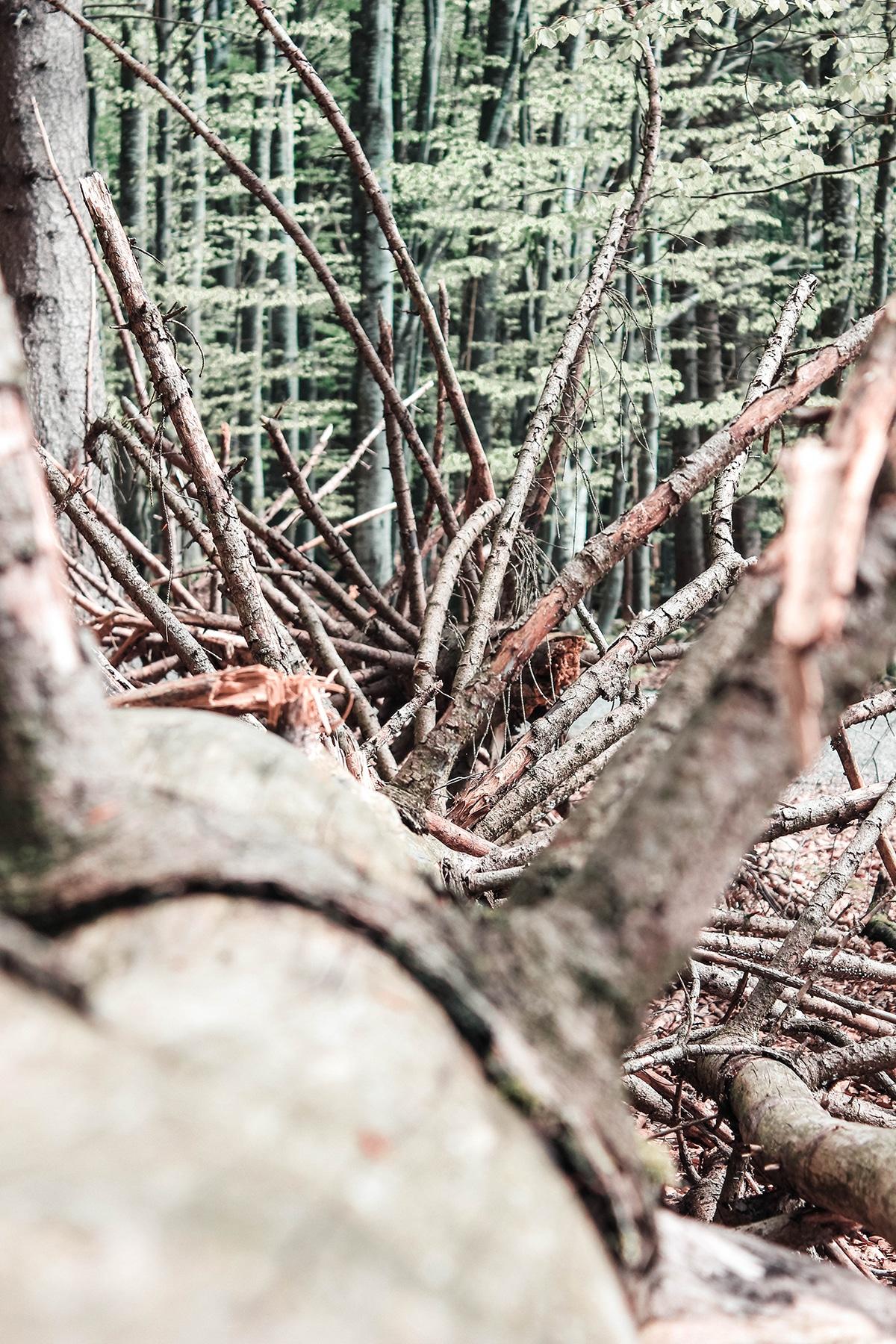 nationalpark-bayerischer-wald-baum-stumpf