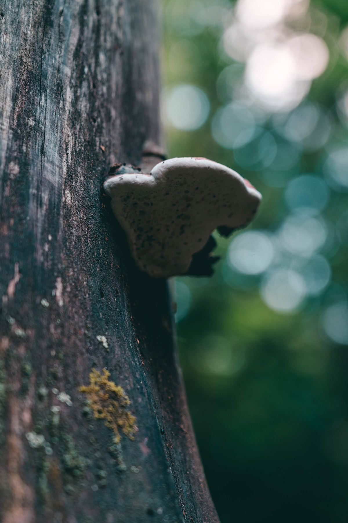 nationalpark-bayerischer-wald-baumpilz
