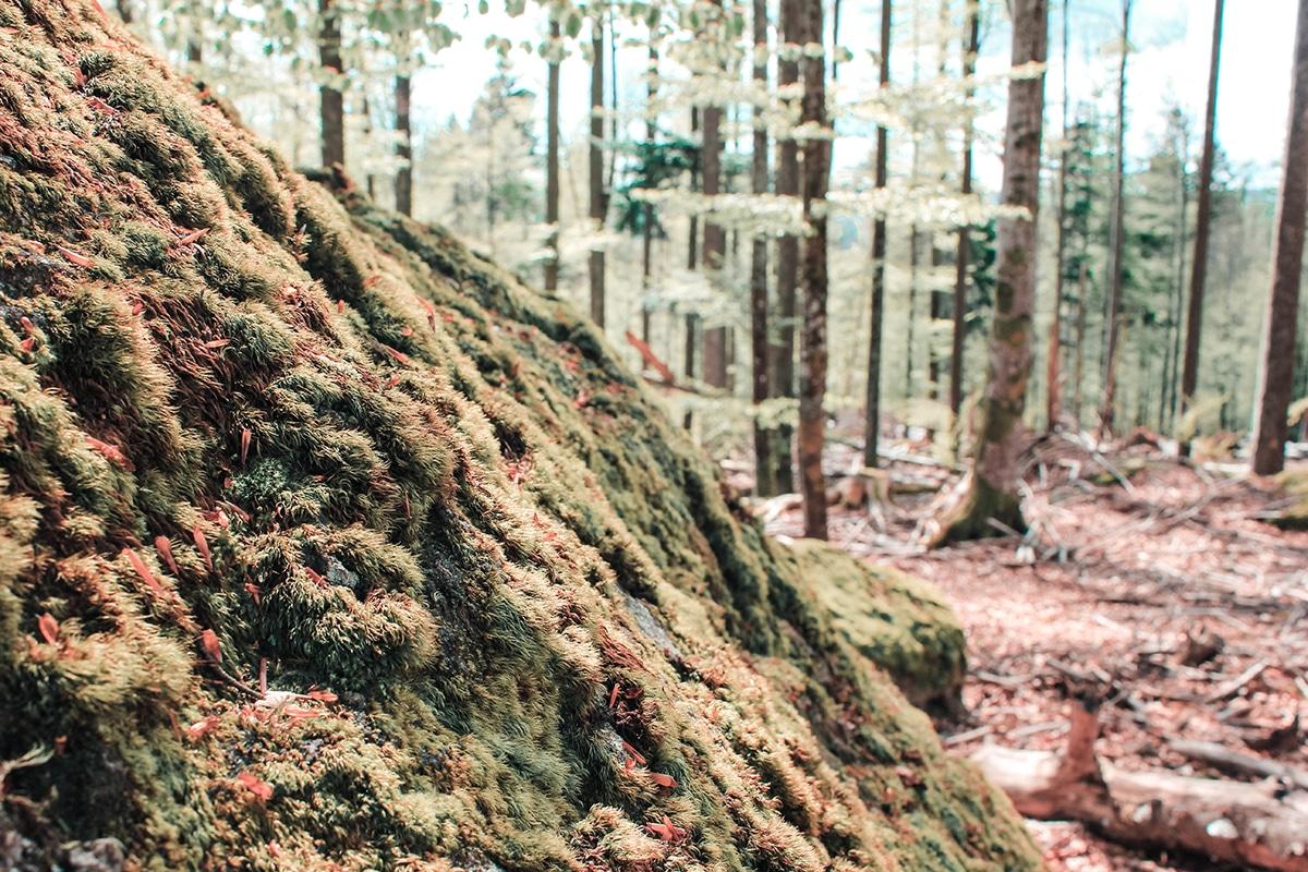 nationalpark-bayerischer-wald-moos