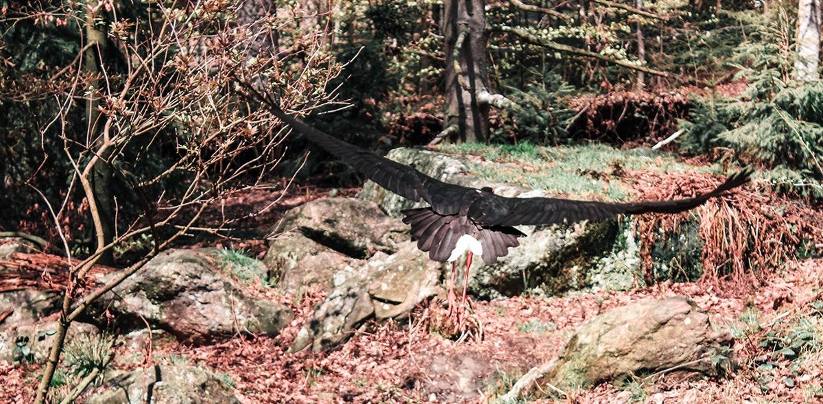 nationalpark-bayerischer-wald-vogel