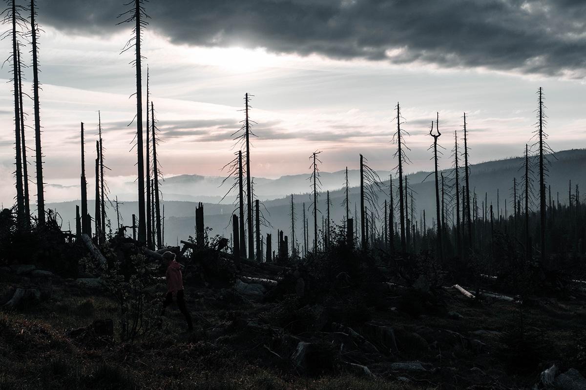 dreisessel-wald-wolken-baeume-panorama