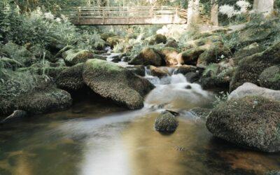 Kurze Wanderungen im Bayerischen Wald – Wackelstein, Mitternacher Ohe, Haidel und Saußbachklamm