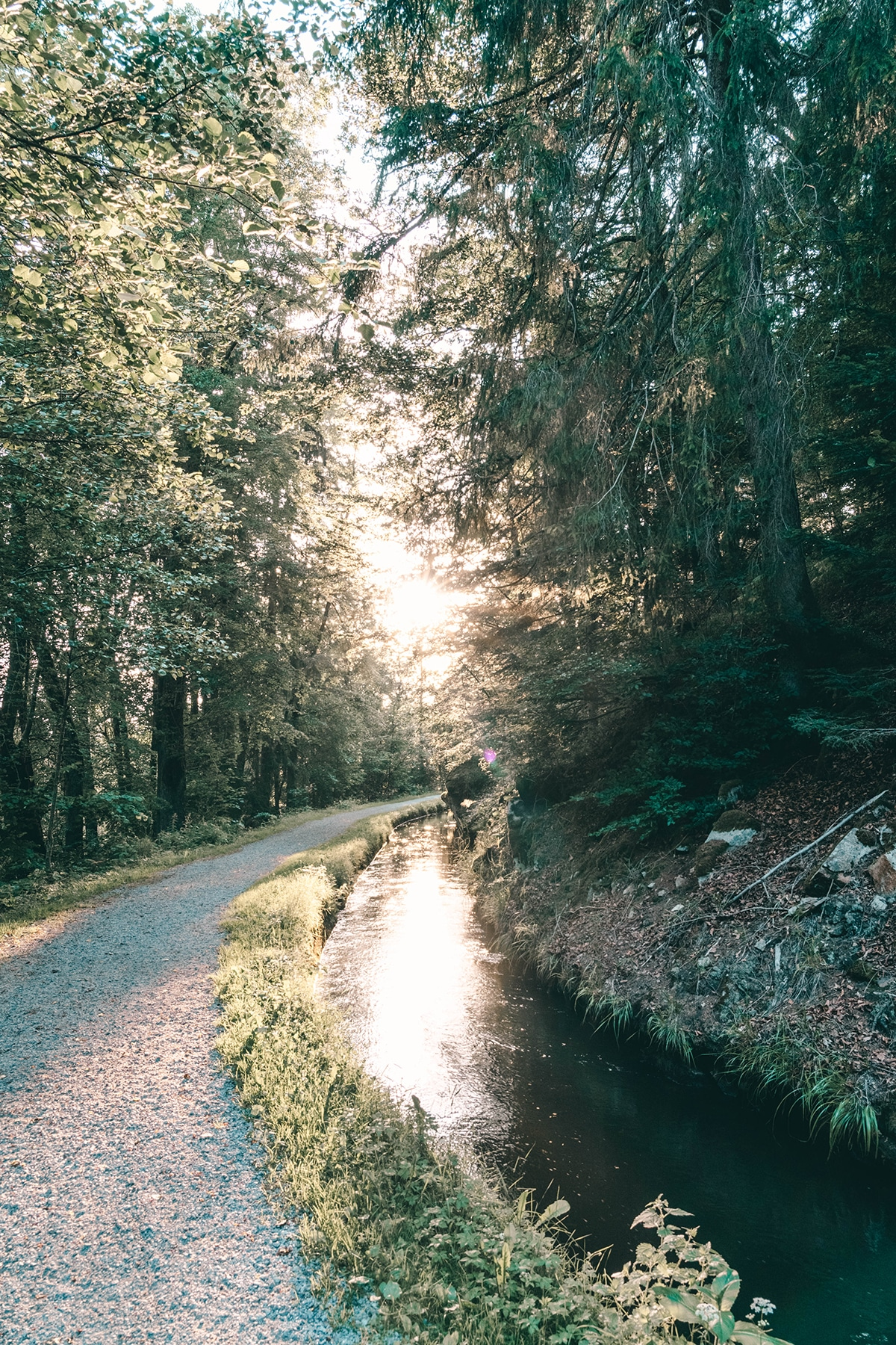 saussbachklamm-kanal-wald