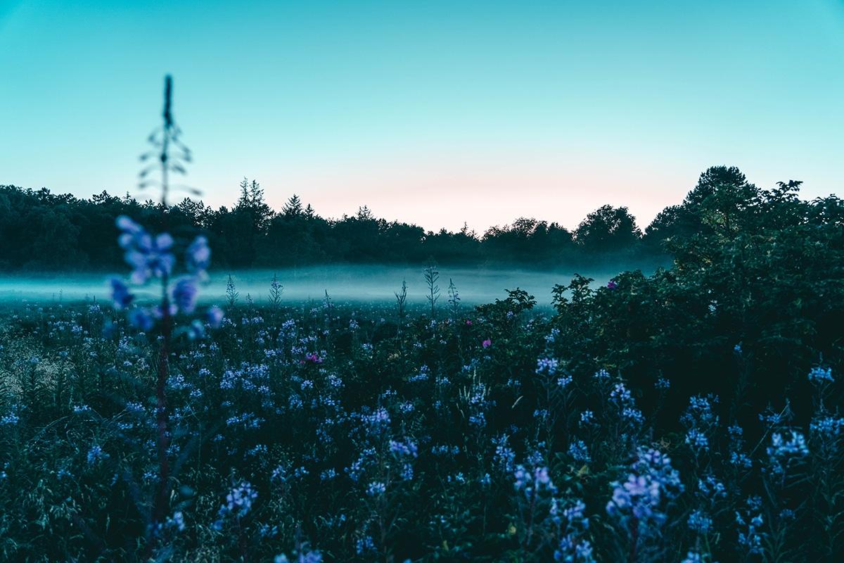 amrum-wiese-nebel
