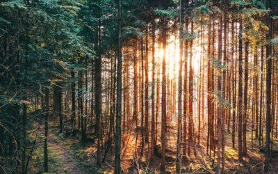 Bayerischer Wald – Orte, Sehenswertes, Berge und Flüsse