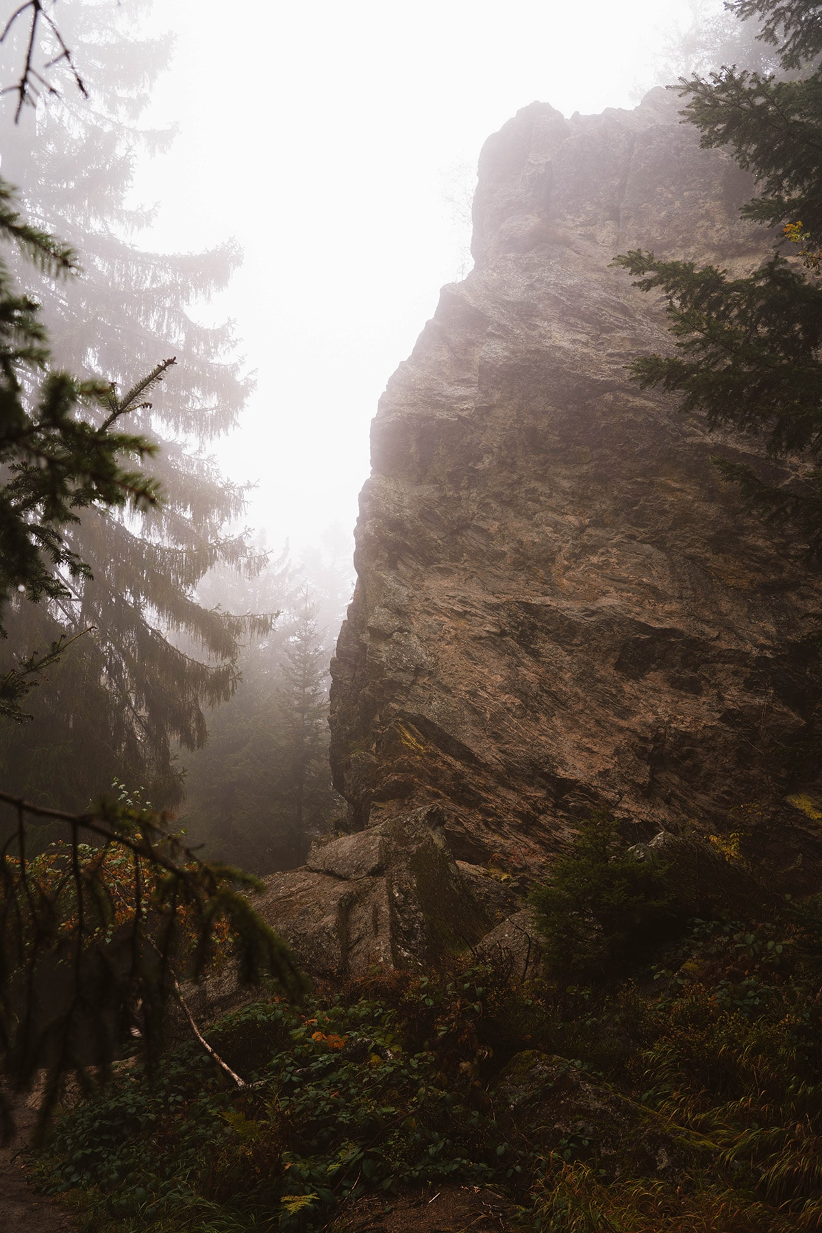 kaitersberg-felsen-wald-nebel