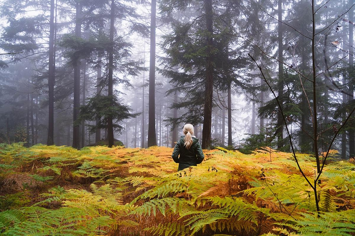kaitersberg-wald-farn-nebel-frau