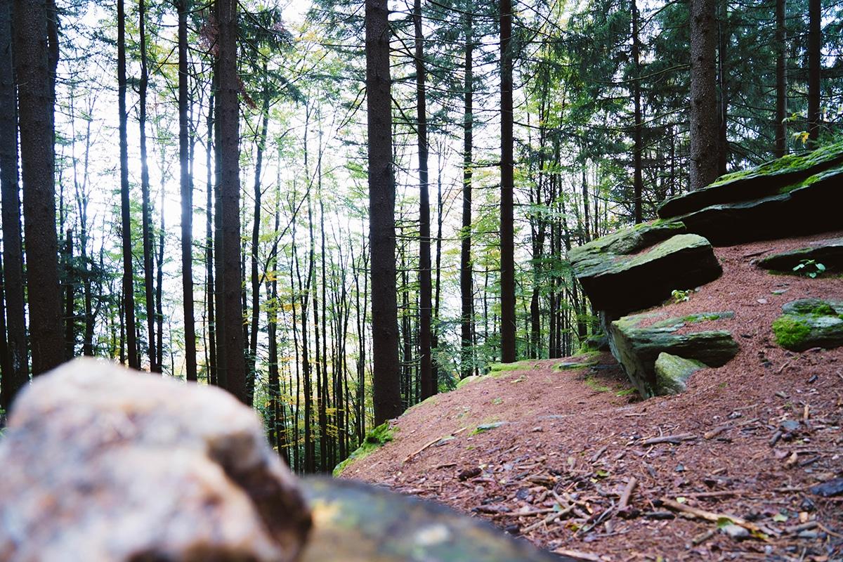 kaitersberg-wald-felsen