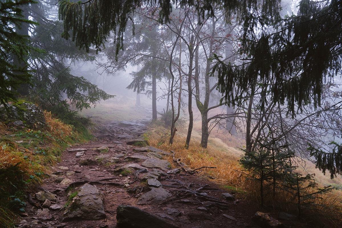 kaitersberg-wald-weg-steine