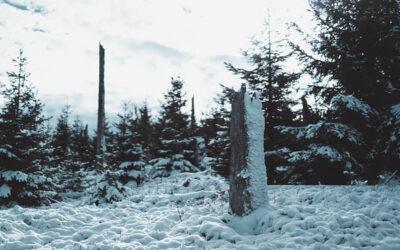 Winterliche Wanderung über die mystische Reschbachklause zum Siebensteinkopf
