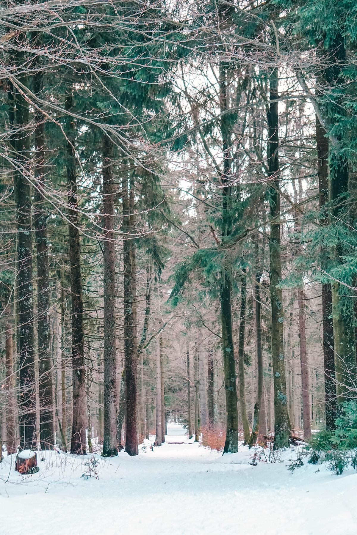 haidel-wald-schnee