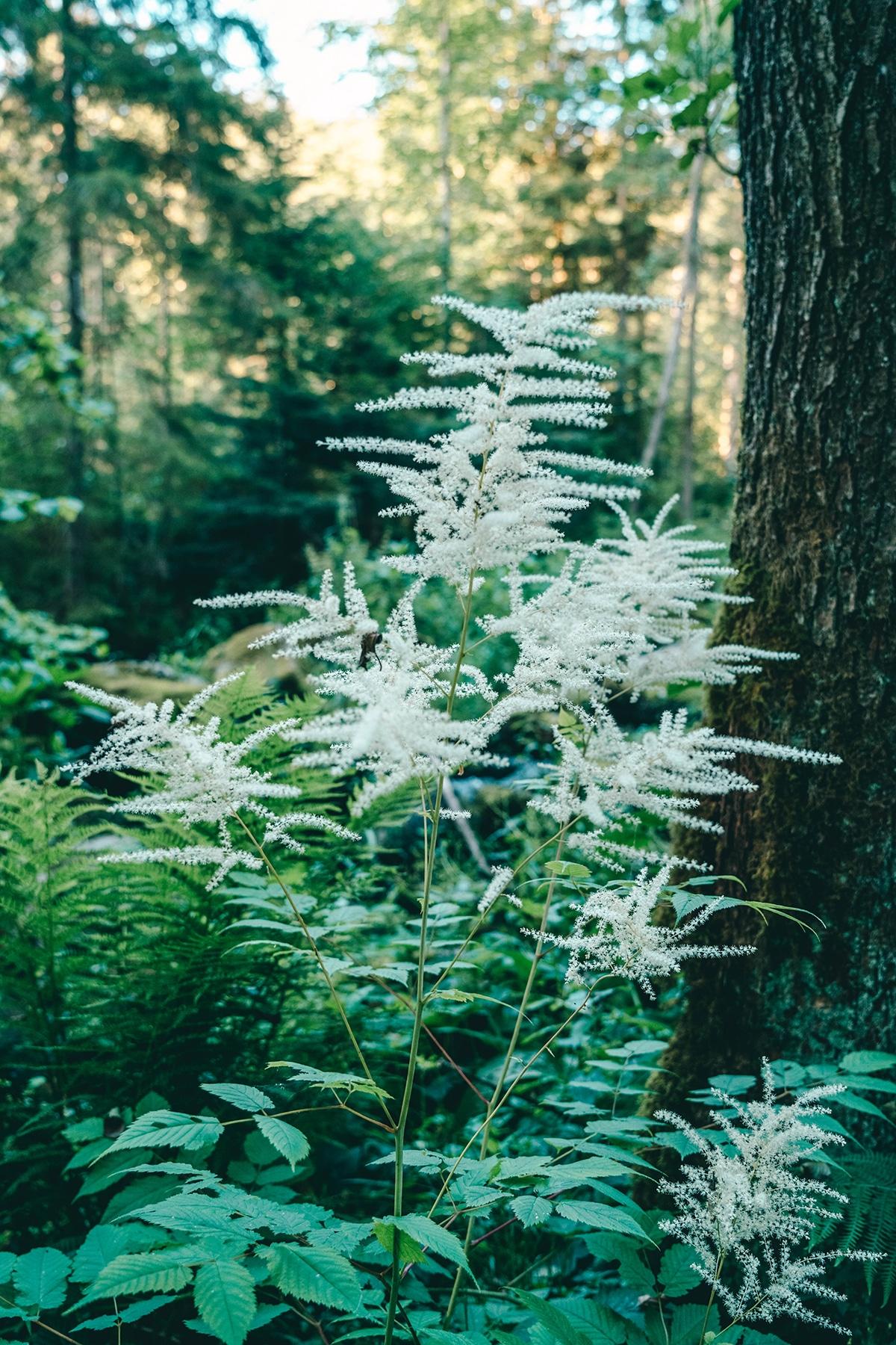 saussbachklamm-pflanzen