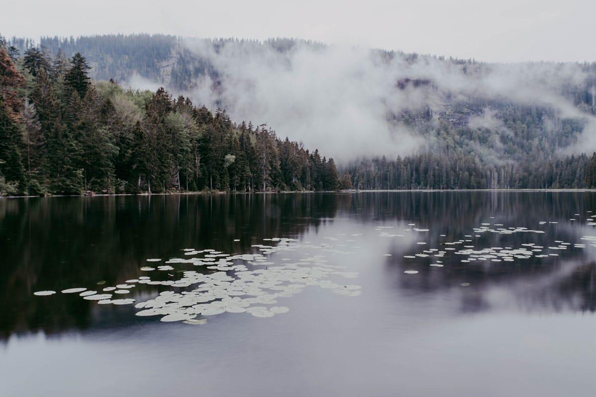 grosser-arbersee-nebel