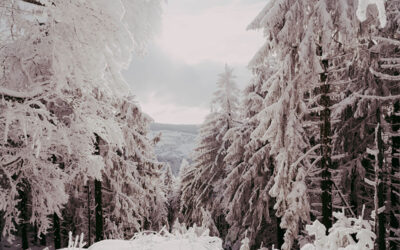 Grandelberg und Schwarzkopf – Geheimtipp Bayerischer Wald