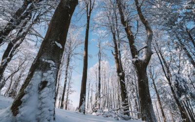 Winterwanderung Ruhmannsberg bei Hauzenberg – Tourentipp im Passauer Land