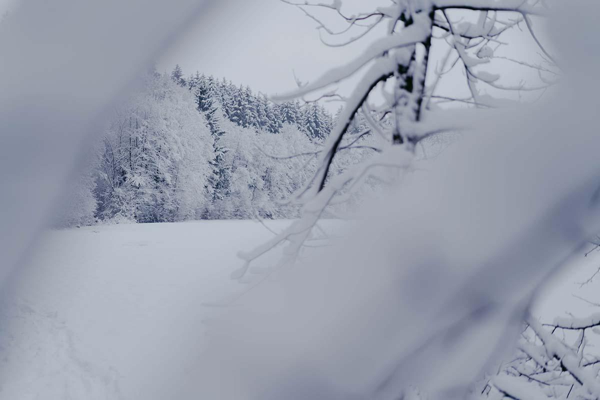 baernloch-winter-aeste
