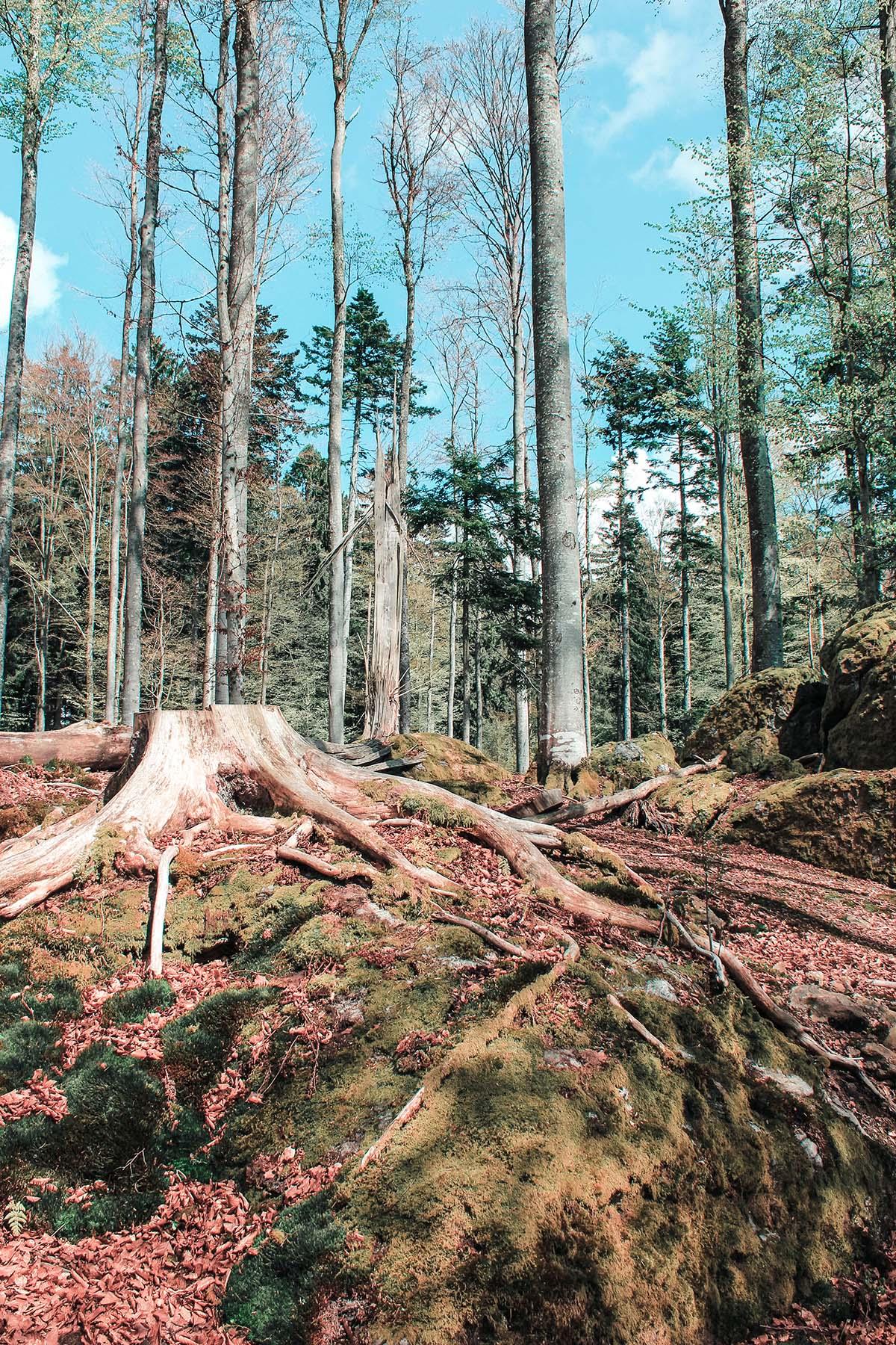 nationalpark-bayerischer-wald-landschaft