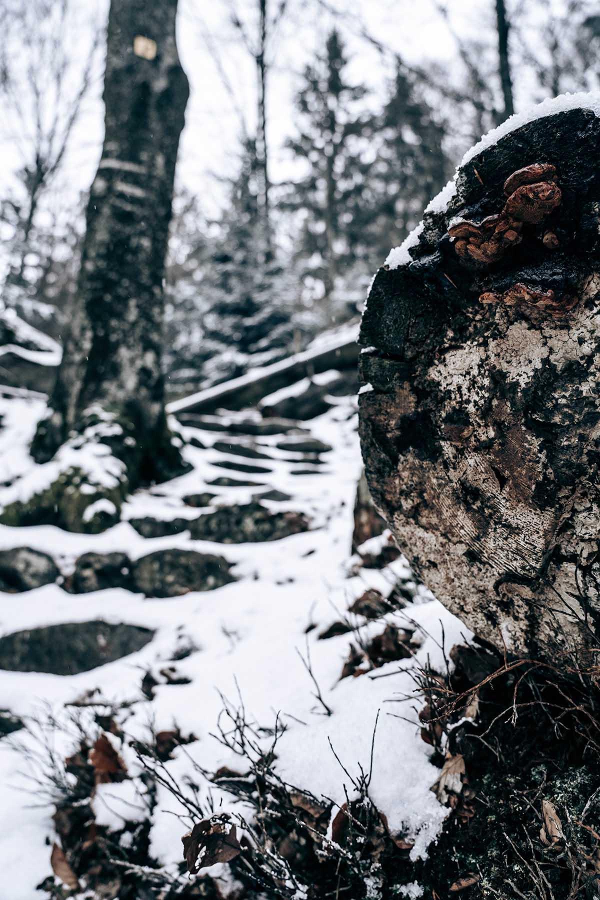 kleine-kanzel-nationalpark-bayerischer-wald-winter