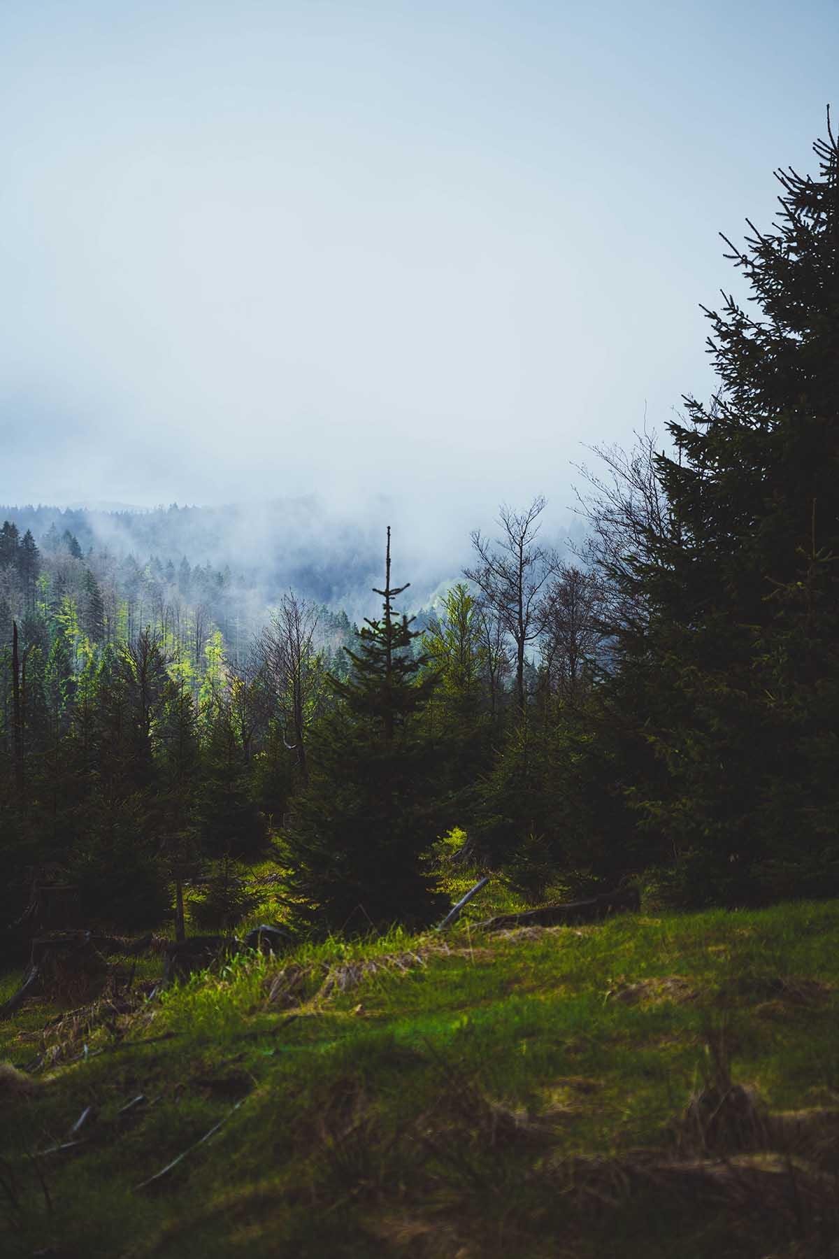 schachtenwanderung-ausblick-wald-nebel