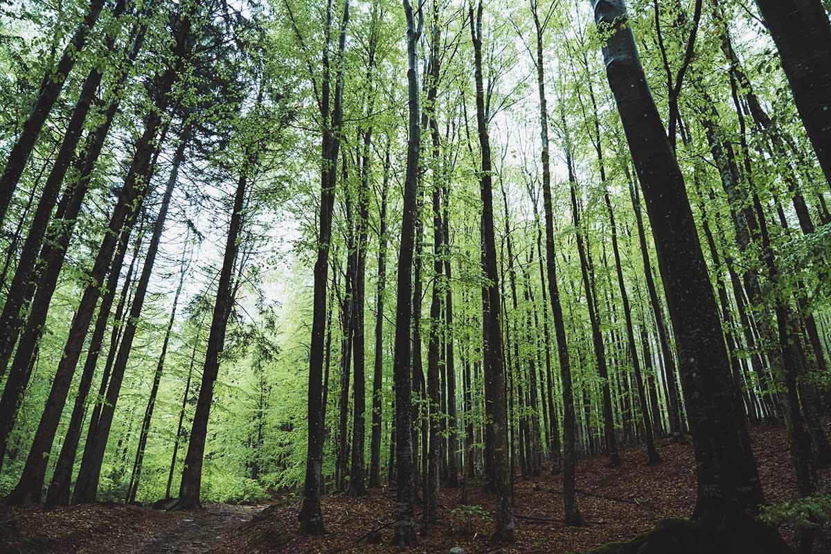 schachtenwanderung-bäume