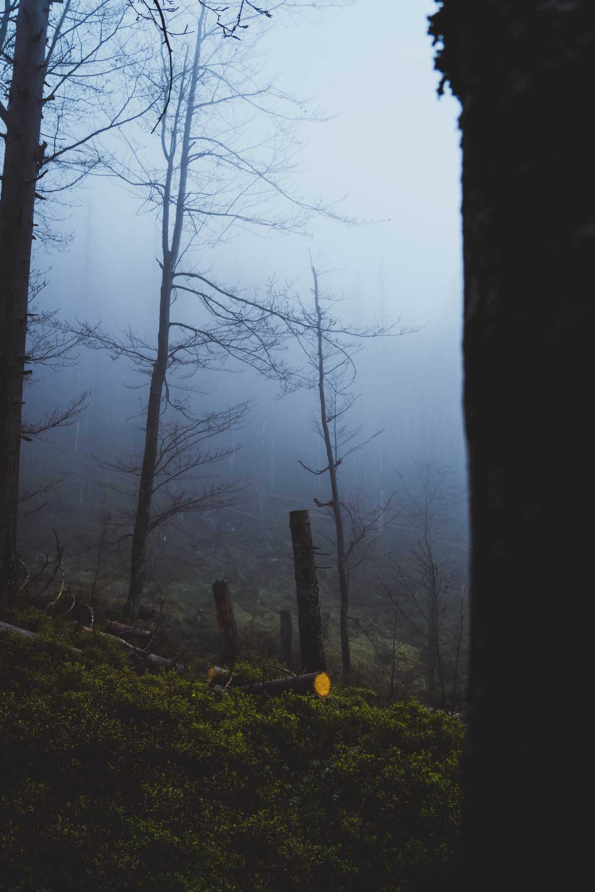schachtenwanderung-nebel