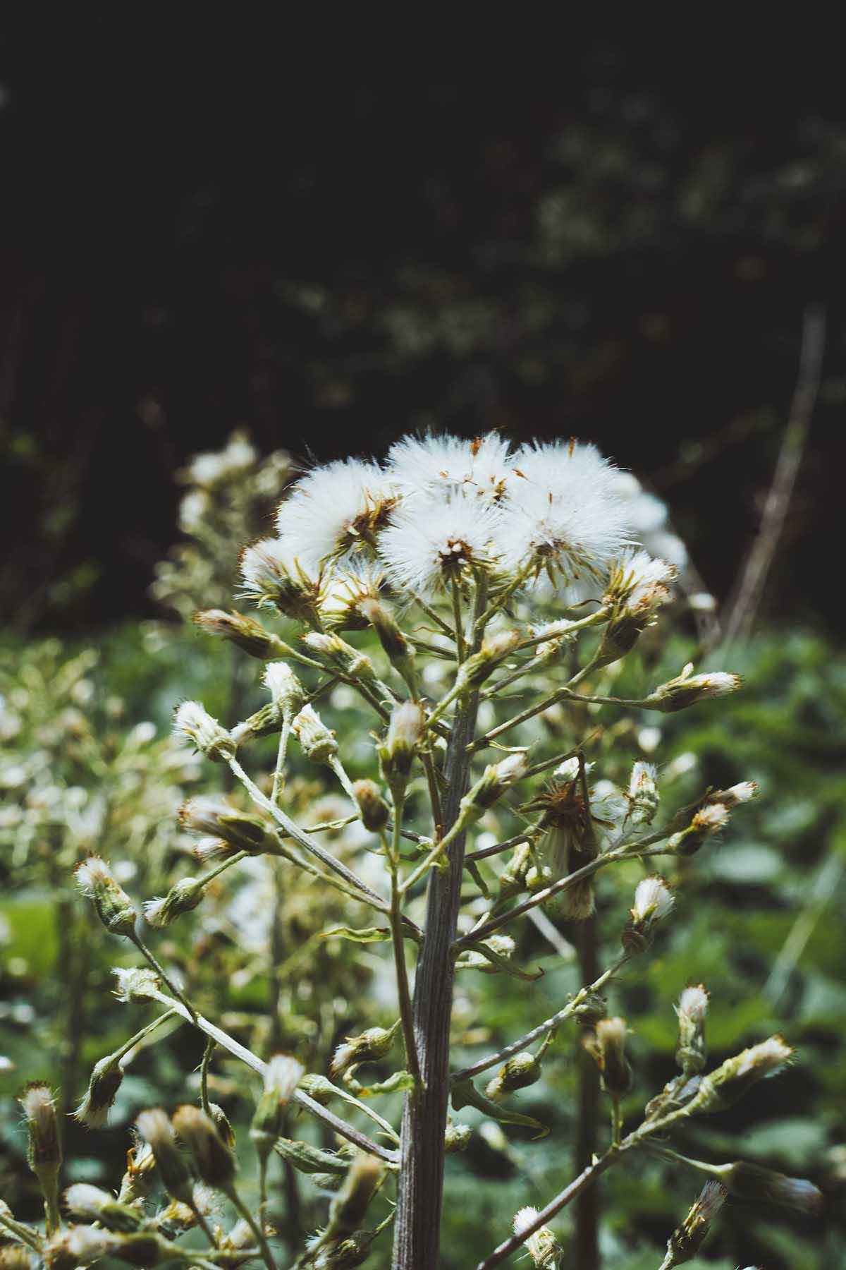 schachtenwanderung-pflanzen-bayerischer-wald