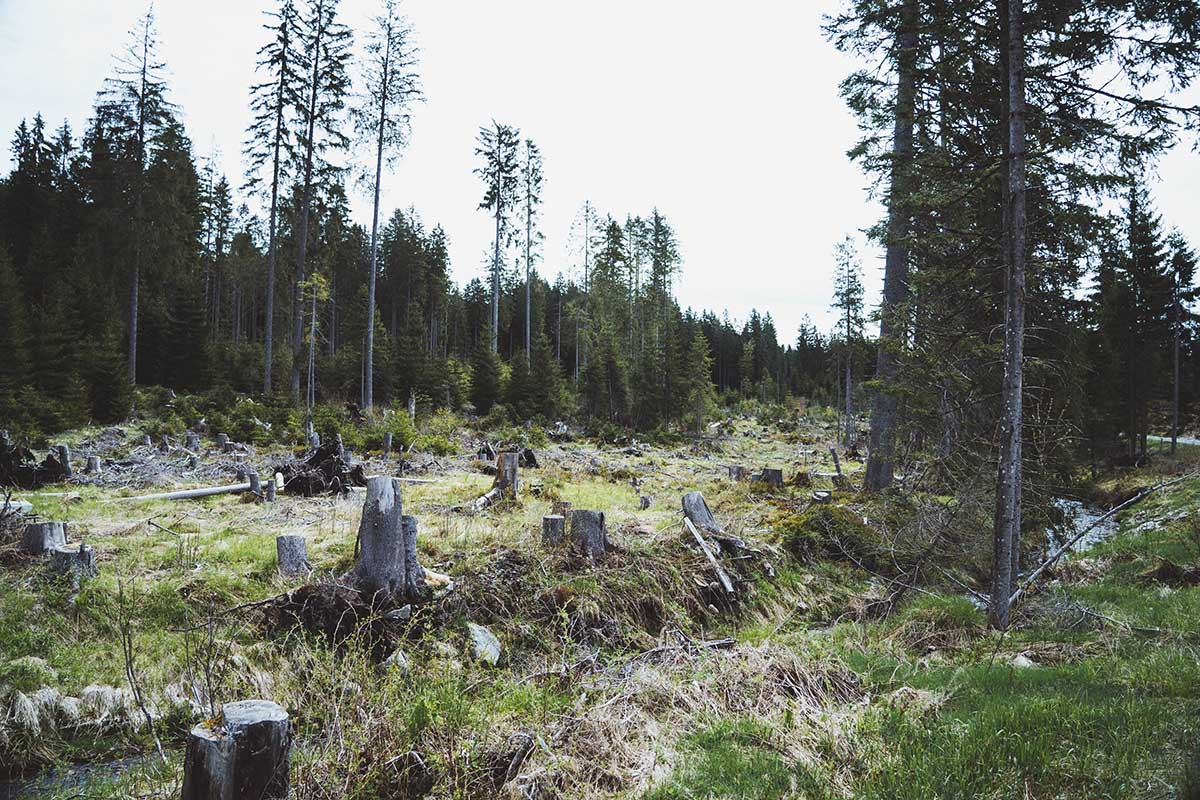 hammerklause-nationalpark-bayerischer-wald