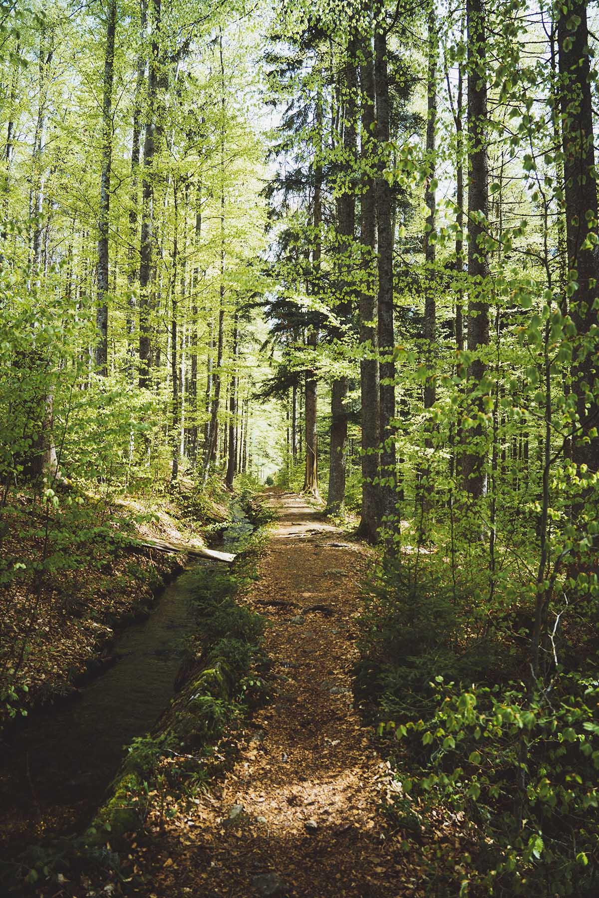hammerklause-teufelsbach-waldweg