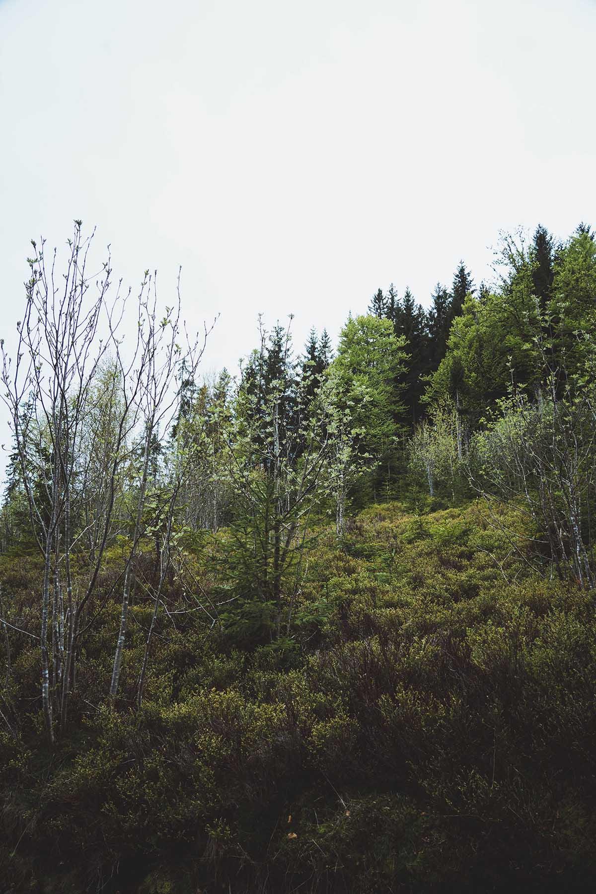 hammerklause-wald-finsterau