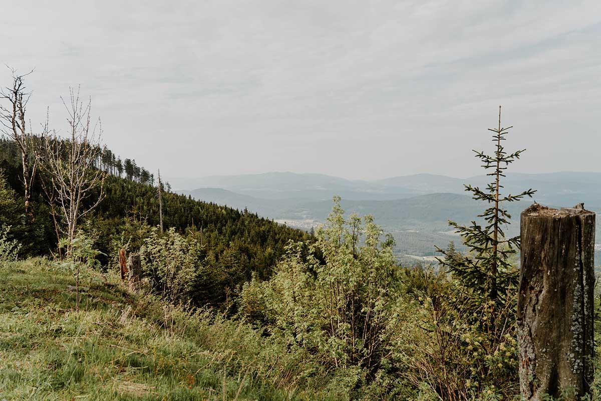 heugstatt-enzian-hochstein-wanderung-wald-landschaft-aussicht