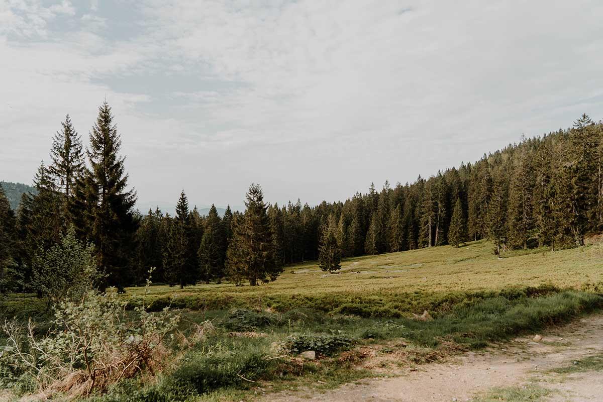 heugstatt-enzian-hochstein-wanderung-wald-landschaft