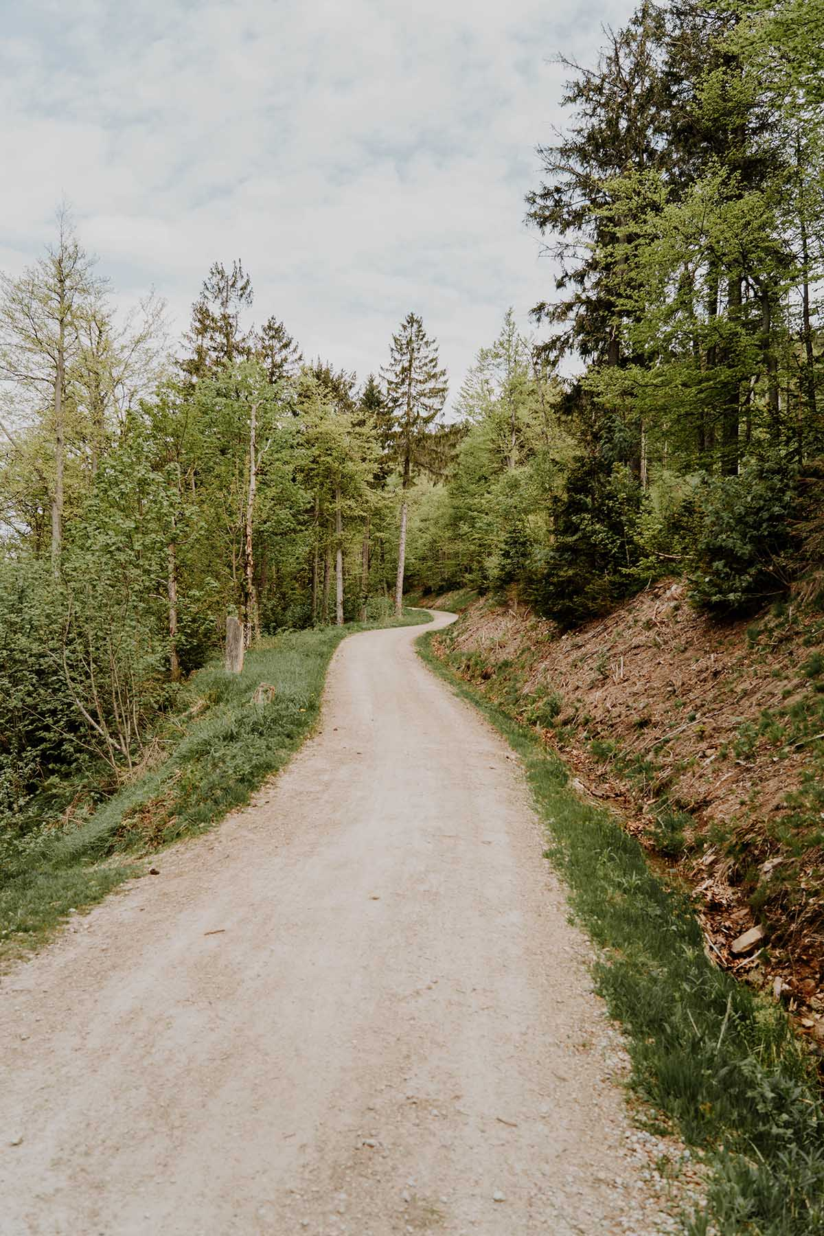 heugstatt-enzian-hochstein-wanderung-wald-weg