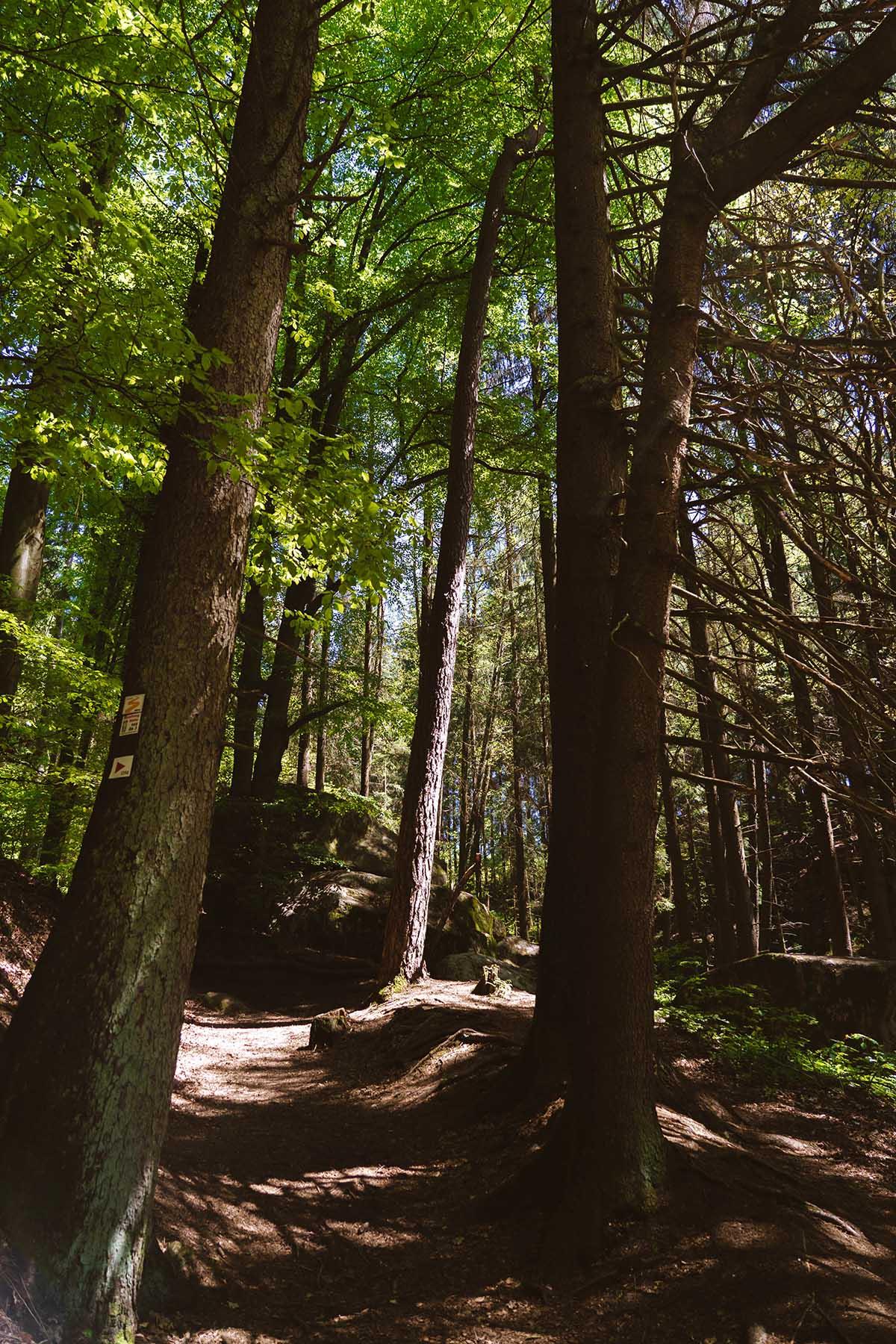 hoellbachtal-wald-landschaft