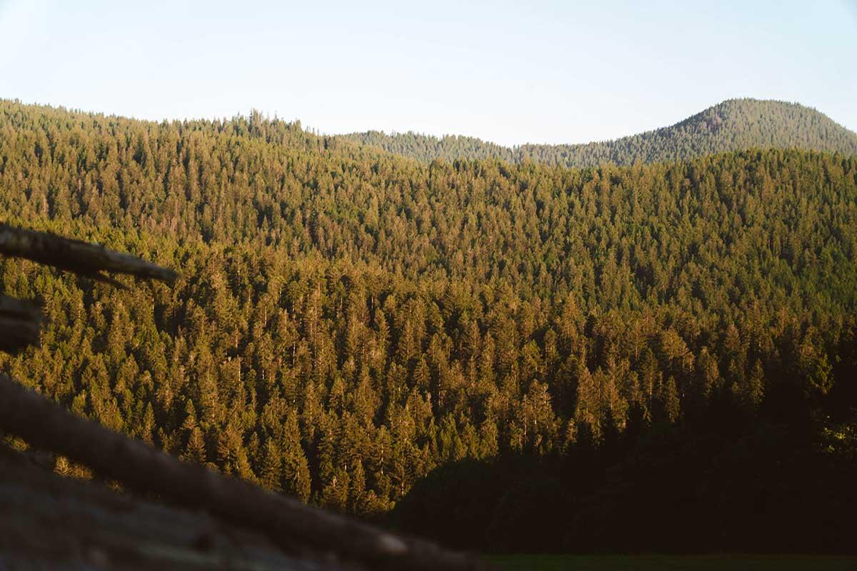 rundweg-grosser-arber-kleiner-arbersee-ausblick-wald