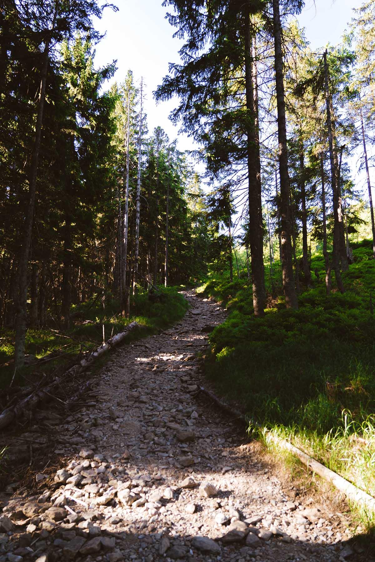 rundweg-grosser-arber-kleiner-arbersee-weg