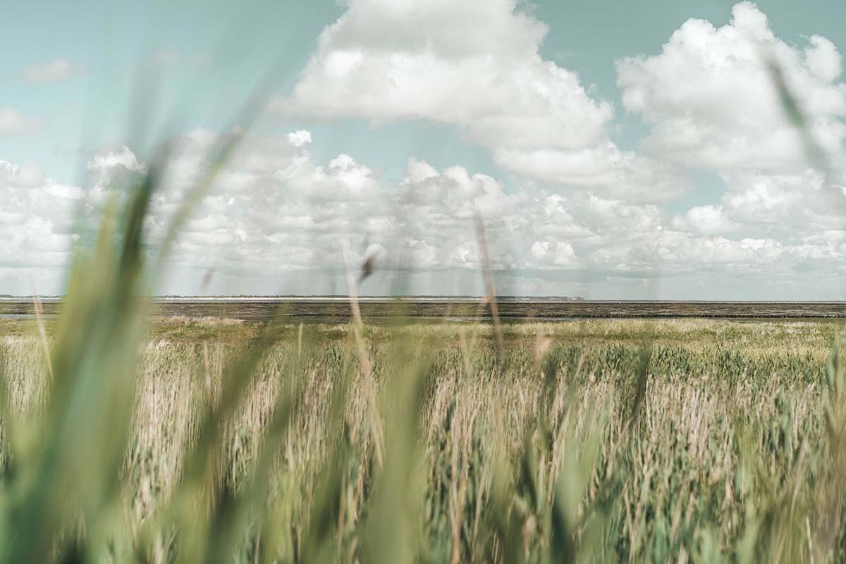 amrum-insel-urlaub-salwiesen-watt
