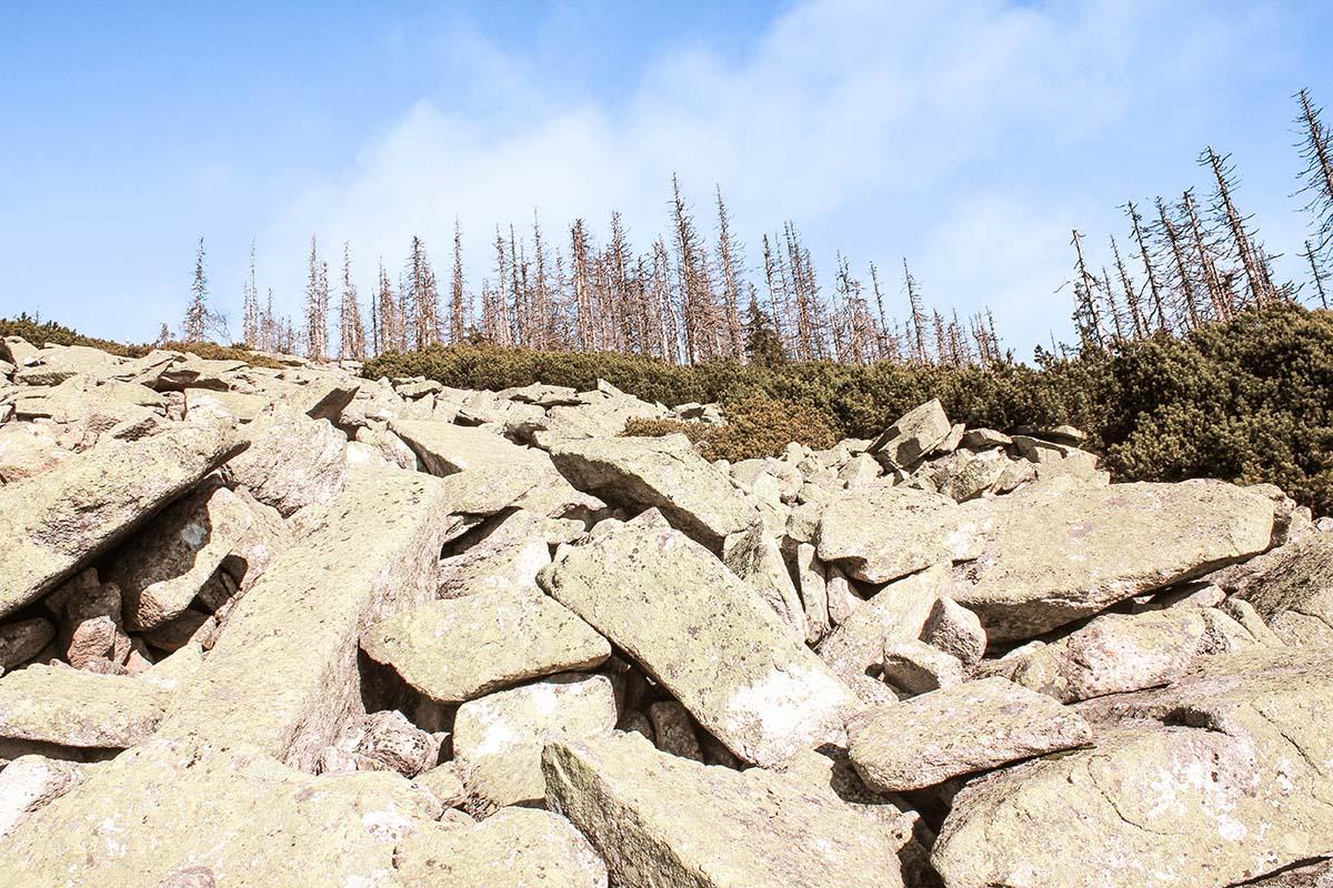 dreisesessel-wandern-steinernes-meer-baeume-03