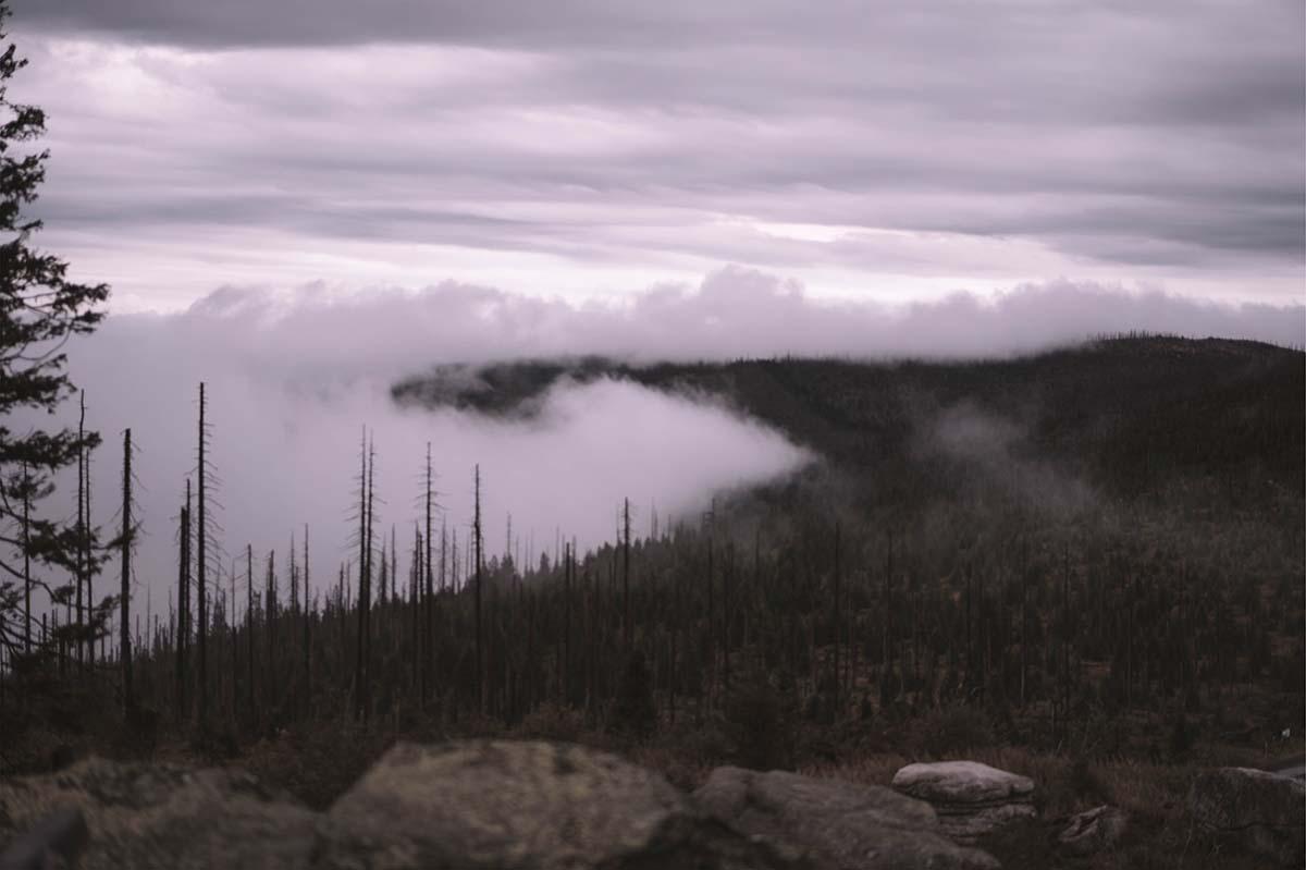 dreisesessel-wandern-wald-nebel-panorama-baeume