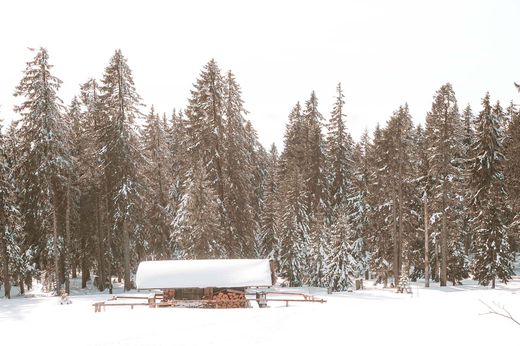 schneeschuhwanderung-arber-huette-im-schnee