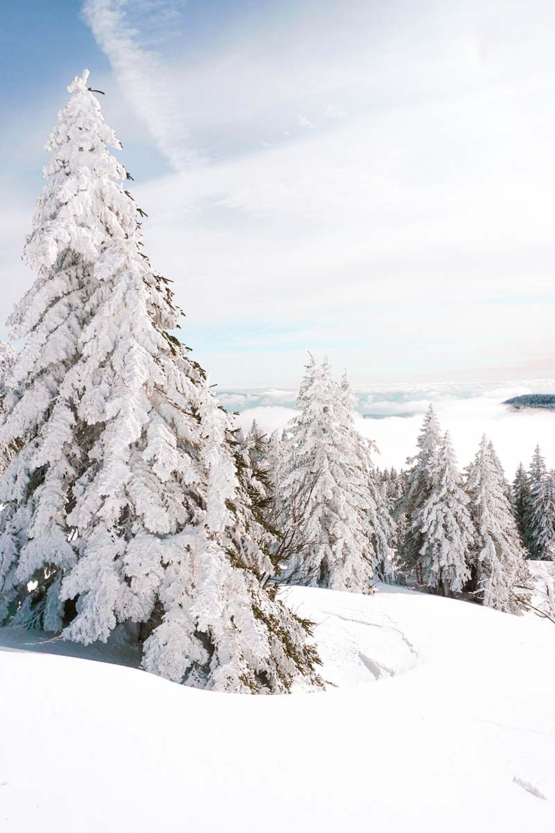 schneeschuhwanderung-arber-wald-baueme-schnee