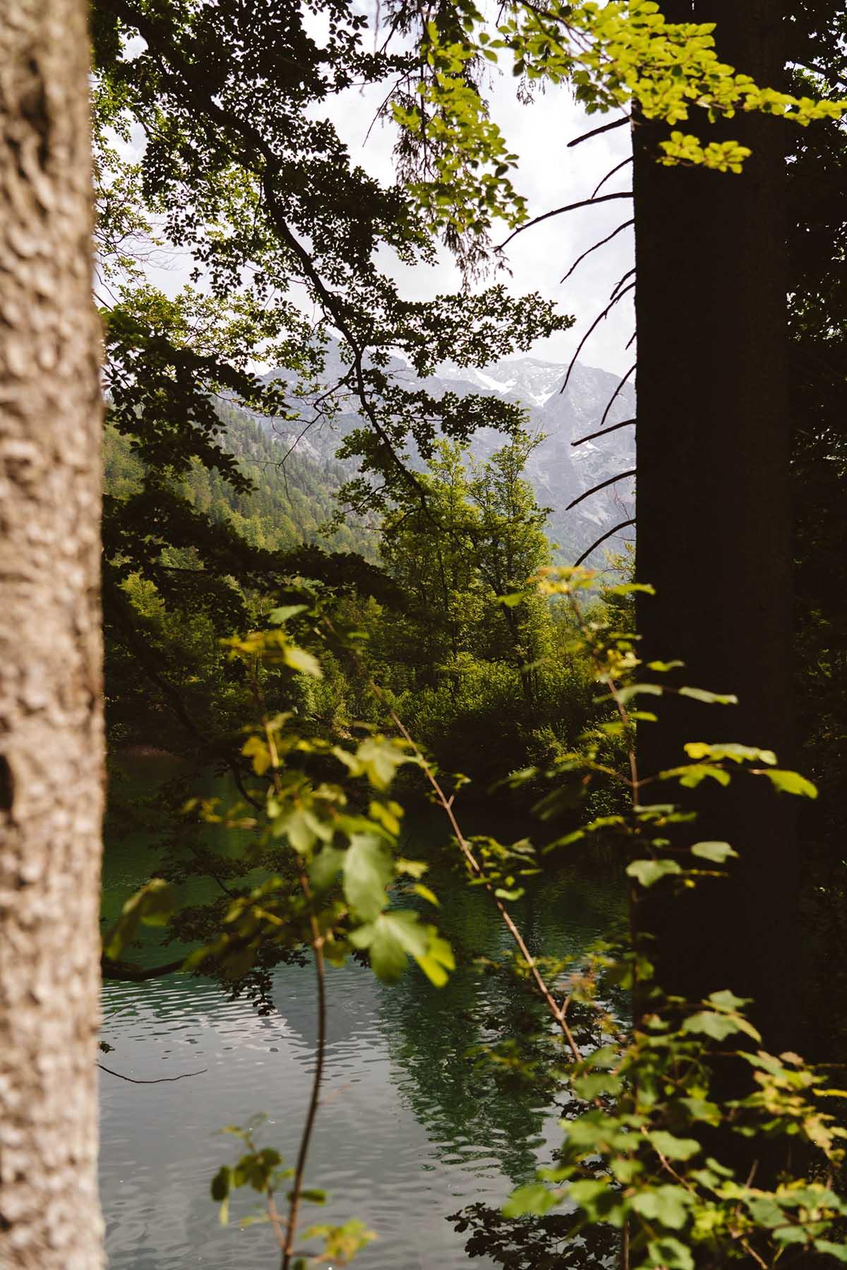 schoenste-badeseen-oesterreich-oedseen-wald-berg