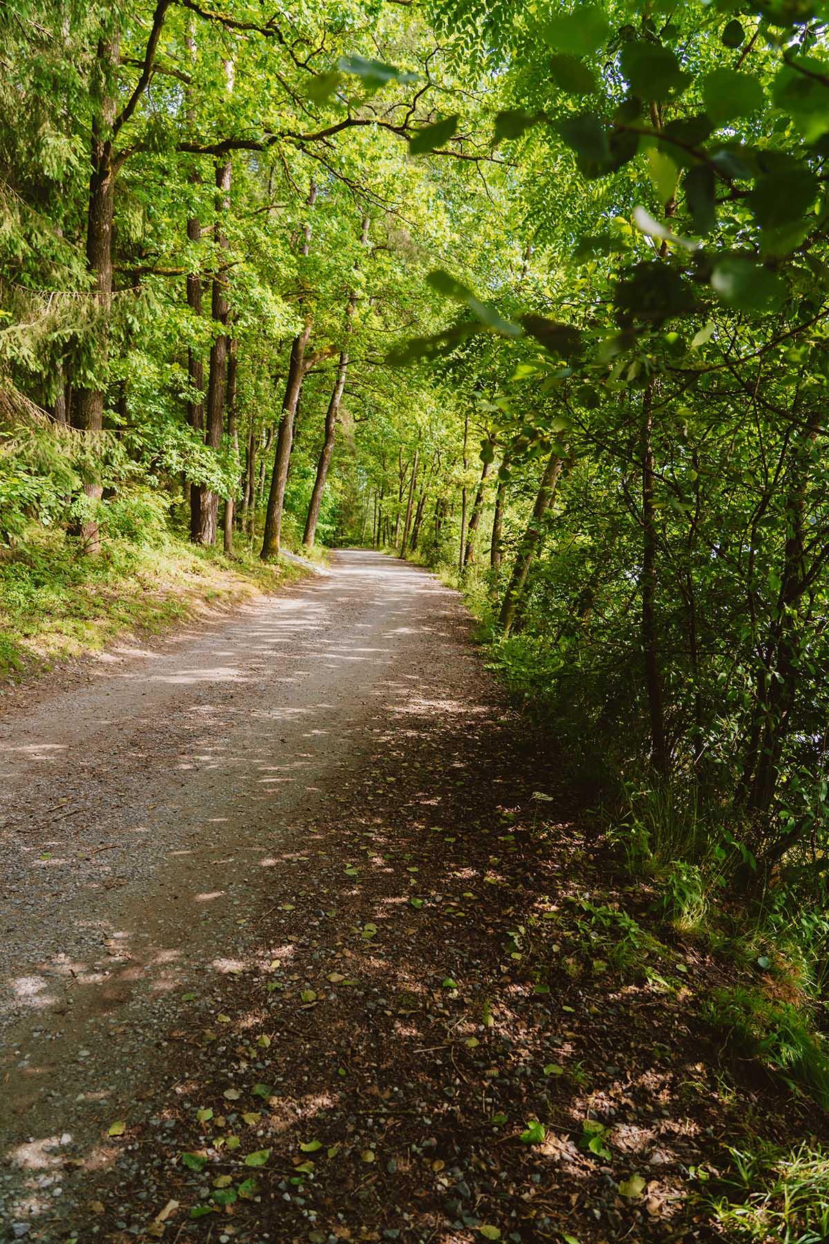 seen-bayerischer-wald-blaibacher-see-rundwanderung
