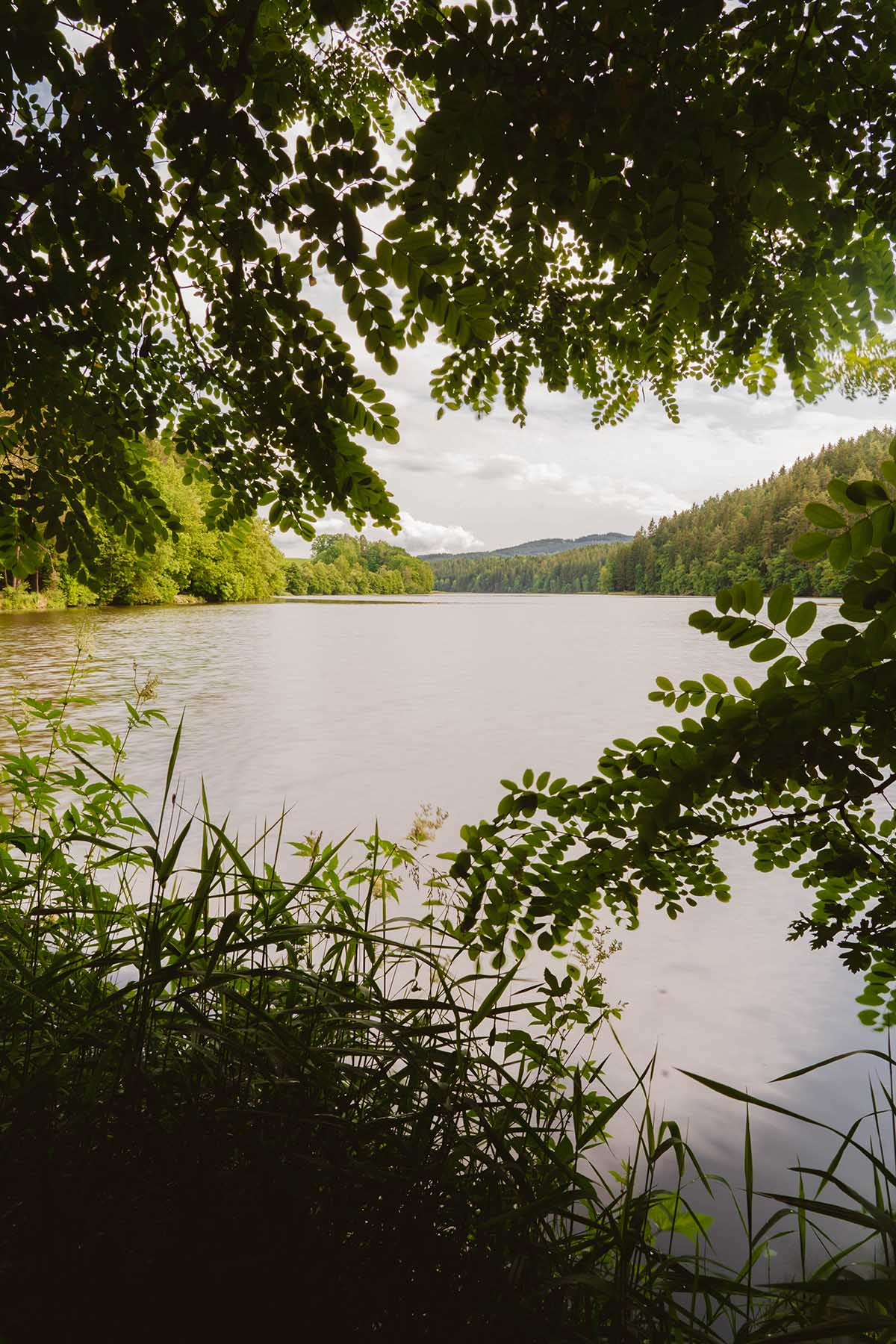 seen-bayerischer-wald-blaibacher-see-rundweg